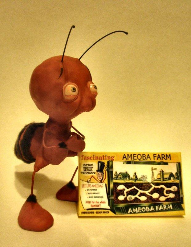 Ameoba Farm - Bledsoe