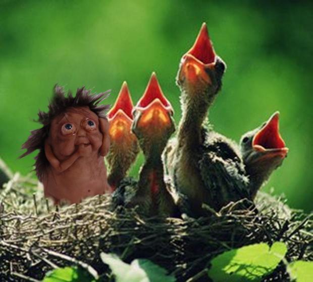 Wrong Nest - Bledsoe